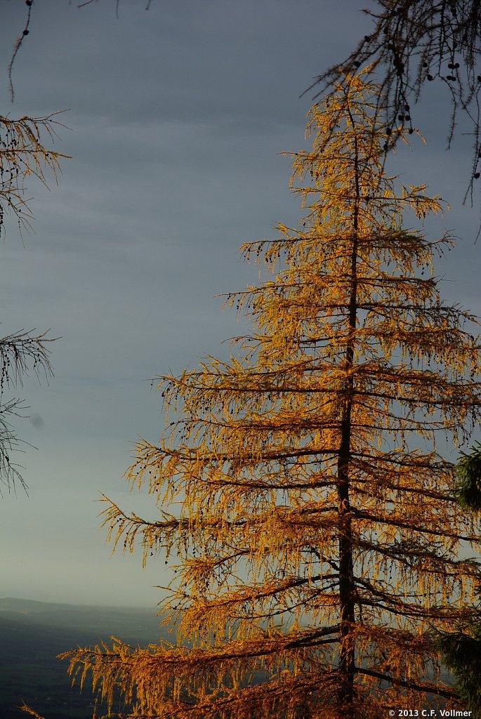 Baum in Abendsonne